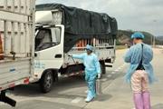 Phát hiện virus SARS-CoV-2 trên bao bì thanh long xuất khẩu: Chỉ mới là trường hợp hi hữu