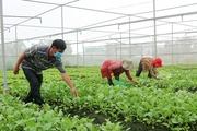 TP.HCM: Chỉ cần quét mã QR code, UBND phường sẽ được hỗ trợ mua đủ loại nông sản