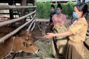 Sơn La: Hiệu quả mô hình đưa gia súc ra khỏi gầm sàn ở Ít Bon