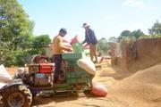 Algeria tạm ngừng nhập khẩu một số sản phẩm động vật, Việt Nam chủ yếu bán sang Algeria nông sản gì?