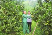 Hà Giang: Đẩy mạnh vai trò hội viên nông dân  trong xây dựng nông thôn mới