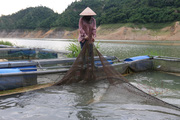 Hoà Bình: Giải pháp tốt sau vụ cá chết hàng loạt tại huyện Đà Bắc