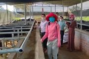 Quảng Nam: Phát triển kinh tế vườn giúp nông dân nâng cao thu nhập