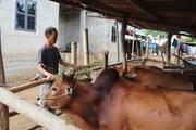 Nông dân Tây Bắc: Từ bỏ ma tuý, lão nông người Mông viết lại cuộc đời