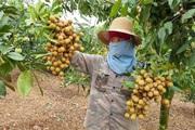 Nông dân Tây Bắc: Vùng biên giới Phiêng Khoài đoàn kết giúp nhau phát triển kinh tế