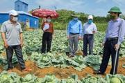 Nông thôn Tây Bắc: HTX Thanh Sơn liên kết sản xuất rau sạch