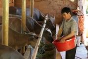 Nông dân Tây Bắc: Hội Nông dân Mường La hỗ trợ hội viên phát triển kinh tế