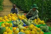 Nông dân miền Tây hối hả lên combo nông sản toàn đặc sản nhưng giá hợp lý chào hàng ở TP.HCM