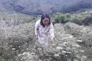 Nông thôn Tây Bắc: Sìn Hồ phát triển sản xuất nông nghiệp theo hướng hàng hóa