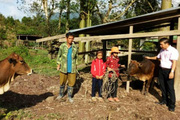 Hộ nghèo hết bán lúa non