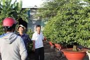 Hội hoa xuân TP. Hồ Chí Minh: Tết này  khó tìm chỗ bán hoa?