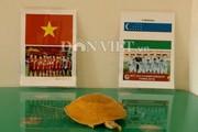 Rùa vàng lại dự đoán kết quả trận đấu U23 Việt Nam và Uzbekistan