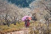 Ghé Mộc Châu mùa hoa mận đừng quên thưởng thức đặc sản ngon nức tiếng
