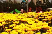 Đắk Lắk: Hoa Tết liên tục hạ giá vẫn ế chỏng chơ