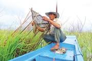Trăm cách bắt cá đồng mùa cạn, dân miền Tây kiếm tiền triệu/ngày