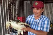 Cà Mau: Một người dân mua rùa 7kg quý hiếm về để thả vào tự nhiên