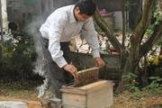 """Người nuôi ong """"méo mặt"""" vì doanh nghiệp đột nhiên ngừng mua mật"""