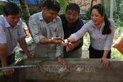 Nuôi lươn vùng ngập lũ: Thu 60 triệu đồng từ 70 cặp lươn bố mẹ