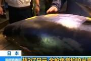 Sốc: Chi gần trăm tỷ chỉ để mua một con cá về làm sushi