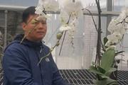 Hoa Tết: 8X đất cố đô kiếm bộn tiền nhờ trồng lan hồ điệp