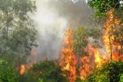 Nguy cơ cháy rừng cấp V, cấp bách triển khai giải pháp phòng chống