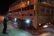 Lập chốt chặn, kiểm soát dịch tả lợn châu Phi suốt ngày đêm