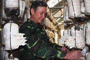 Bỏ lên núi trồng 6 trại nấm, lãi ròng 600 triệu đồng mỗi năm
