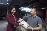 Đi Đài Loan về trồng nấm ở phố núi, bỏ túi 300 triệu/năm