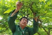 Lạng Sơn có 2 xã đầu tiên cán đích nông thôn mới nâng cao