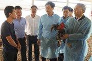 Năm khó khăn chưa từng có đối với ngành chăn nuôi