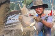 Hà Tĩnh: Dân ra biển mùa sương bắt cá đốm, tôm he bán đắt tiền