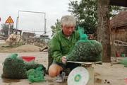 Trừ khử 700 tấn ốc này, dân Hà Tĩnh thu cả tỷ đồng, yên tâm ăn Tết