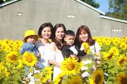 Trồng hoa hướng dương cho khách vào chụp ảnh, thu 5 - 7 triệu/ngày