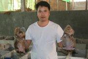 Năm nào cũng ăn Tết to nhờ nuôi cả ngàn con chuột nứa...bự