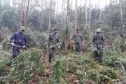 Thái Nguyên: Nâng cao hiệu quả công tác quản lý bảo vệ rừng