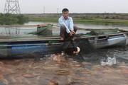 Thuê nước nuôi loài cá mình hồng tươi rói, lúc nào bán cũng chạy