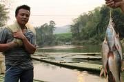 """Cả làng giữ đoạn suối 3km, khi """"có lệnh"""" chài 1 phát toàn cá ngon"""