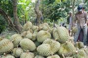 Thời virus corona, dừng đàm phán xuất khẩu chính ngạch sầu riêng
