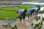 Mai Châu: Nông dân thung lũng du lịch náo nức đi cấy đầu xuân