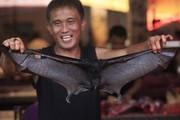 """Bất chấp virus Corona, thịt dơi vẫn """"đắt như tôm tươi"""" tại quốc gia Đông Nam Á này"""