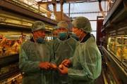 Bộ trưởng NNPTNT kiểm tra cúm gia cầm tại công ty lớn nhất miền Bắc