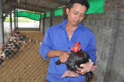 """Đàn gà tiến vua, gà """"chân voi"""" được bảo vệ thế nào trước dịch cúm?"""