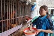 """Clip: Bắc Ninh bỏ thú y thôn """"chỉ có khó khăn không thuận lợi"""""""