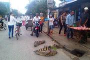 Hà Tĩnh: Thả cá sấu ra đường phố để... tiếp thị