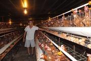 Nhập lậu giống gia cầm sẽ thủ tiêu ngành chăn nuôi