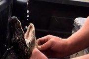 Cái kết của hai thanh niên Mỹ ép cá sấu uống bia, hút thuốc