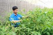 Kỹ sư cao đẳng về quê trồng rau VietGAP, lãi hơn 30 triệu mỗi tháng