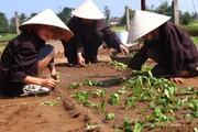 Du lịch nông thôn:Cân bằng giữa phát triển và bảo tồn