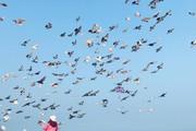 Bình yên bên bờ biểnvà ngắm bồ câu giữa lòng thành phố Đà Nẵng