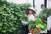 Khu vườn xanh mát bội thu rau quả sạch đáng nể của mẹ Việt ở Nhật